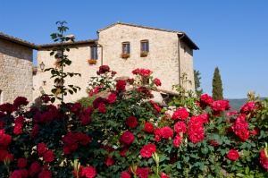 villa and roses